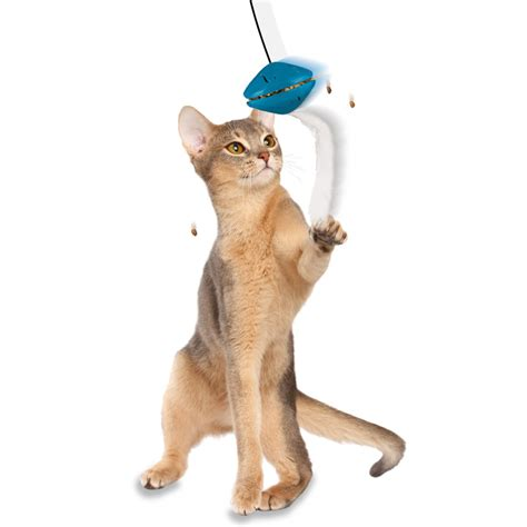 challenging toys challenging cat toys images