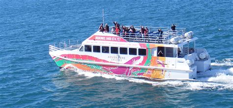 hervey bay boat club christmas lunch whale watching hervey bay all tour bookings