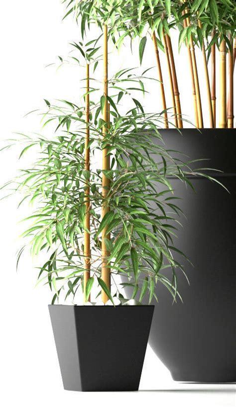 Bamboo Plants 3d Model Free
