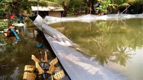 Pakan Udang Kali sungai bogowonto meluap ratusan tambak udang vaname di