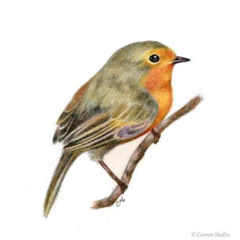 european robin by carmen medlin from colored pencil art