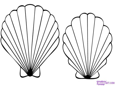shell coloring pages shells free colouring pages