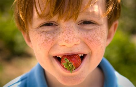 can my eat strawberries 10 reasons to eat strawberries florida strawberry