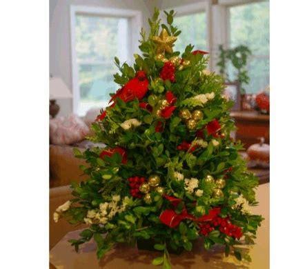 boxwood christmas tree linda s flowers and plants