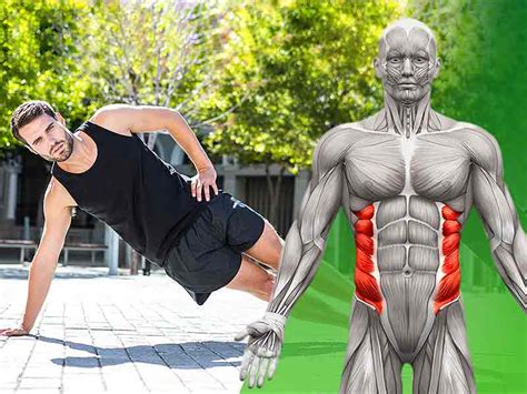 abdominal oblique muscles functional anatomy guide