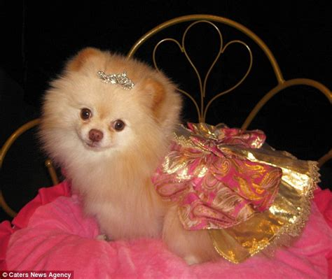 pomeranian and children pomeranian clothes and accessories oloom
