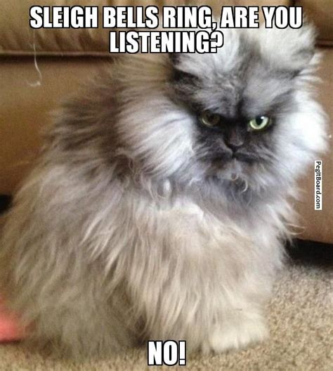 Colonel Meow Memes - sleigh bells ring are you listening no pissed off cat