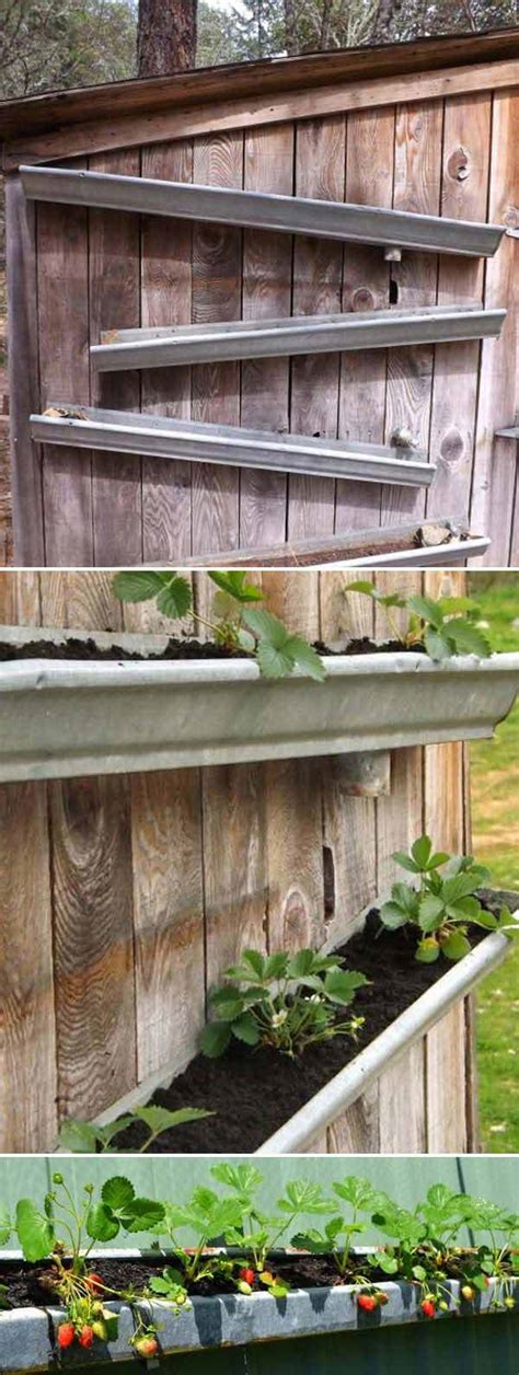 Gutter Planters On Fence by Creative Diy Ideas For Growing Strawberries On Small