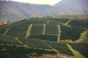 severts tree farm hill top wide shot picture 1 from