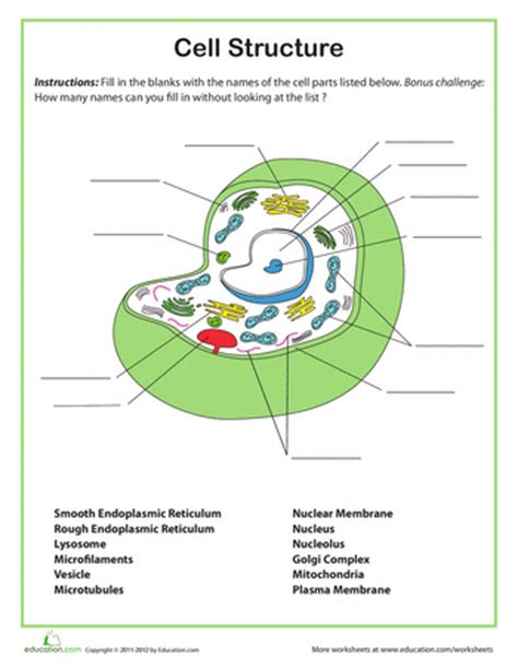 cell structure and processes worksheet genetics basics biology worksheets education