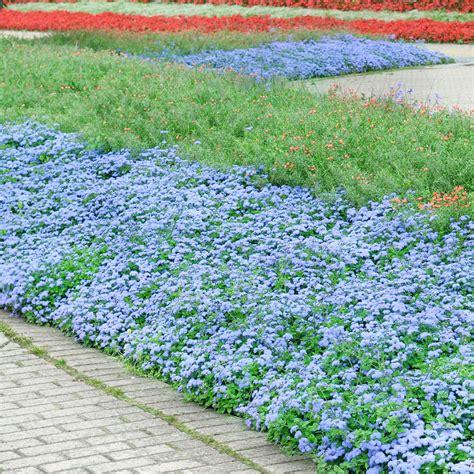 Perennial Flower Bed Designs For A Garden That Resembles Garden Flower Beds