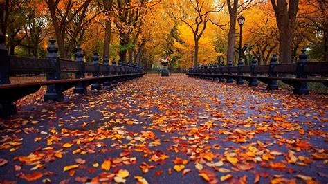 wallpaper hd 1920x1080 autumn full hd autumn or fall wallpapers with maple leaves