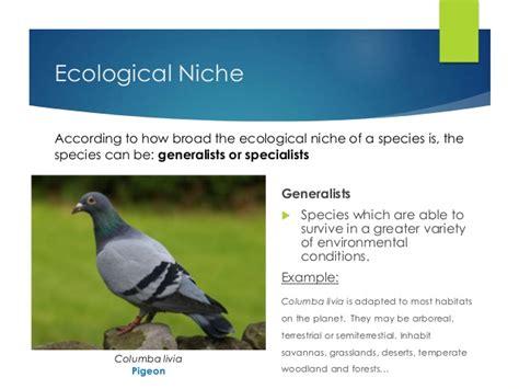 exle of niche lesson 24 ecological niche