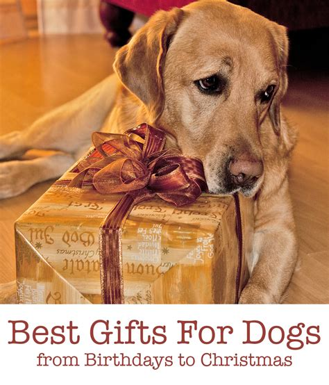 top pet gifts best dog gifts for christmas birthdays gotcha days and more
