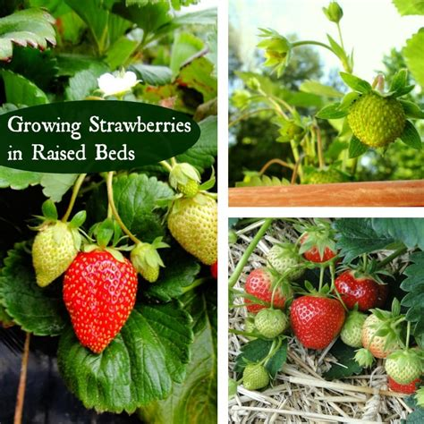 growing strawberries in raised beds how to welcome beneficial wildlife to your garden mom foodie