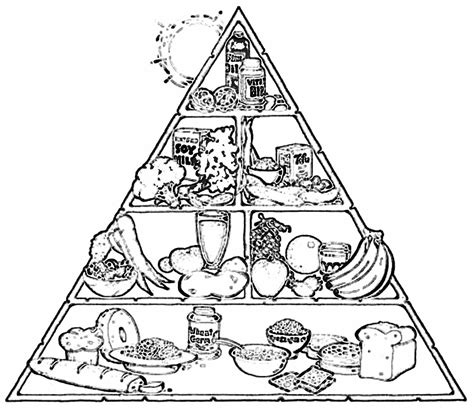 coloring page of the food pyramid food chain coloring pages coloring home