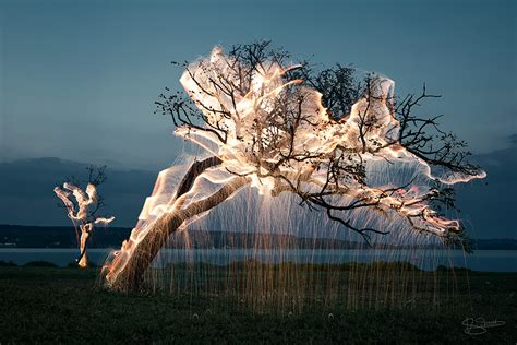3 tree with lights light appears to drip from trees in these exposure