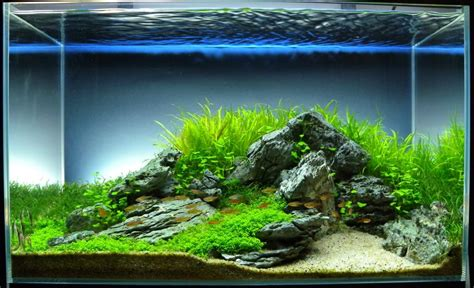 freshwater aquarium aquascape design ideas 64l iwagumi scape by icepotato89 user from tankedplant