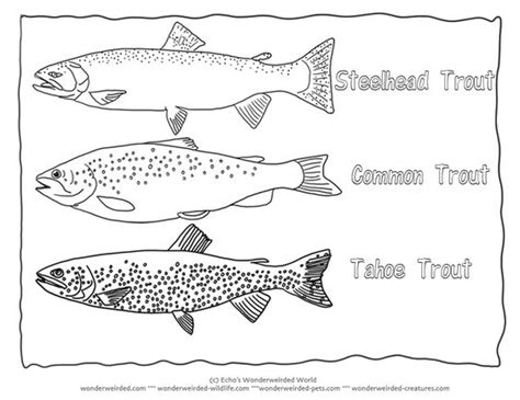 trout fish coloring page trout coloring page collectionfrom our wonderweirded fish