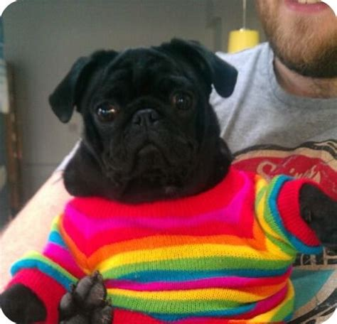 rainbow pug rainbow pug keep calm and hug a pug