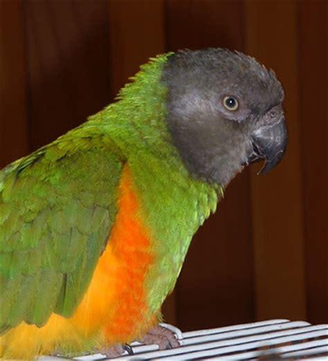 hd animals small parrots