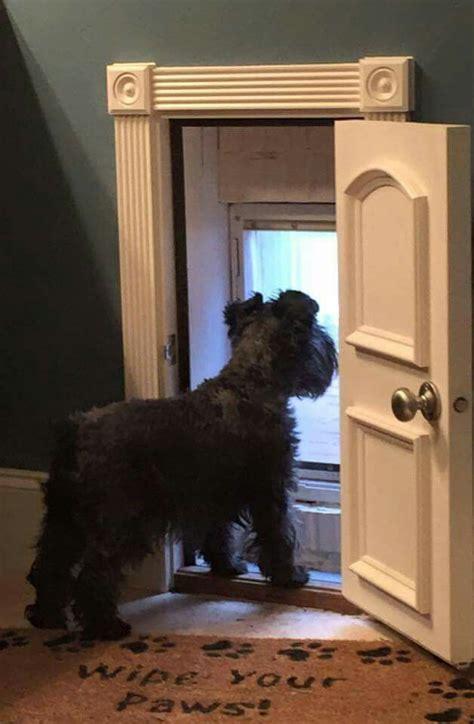 doggie door in door best 25 pet door ideas on rooms ti and