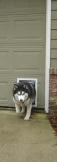 Overhead Garage Door Pet Doors Pet Doors For Garage Doors