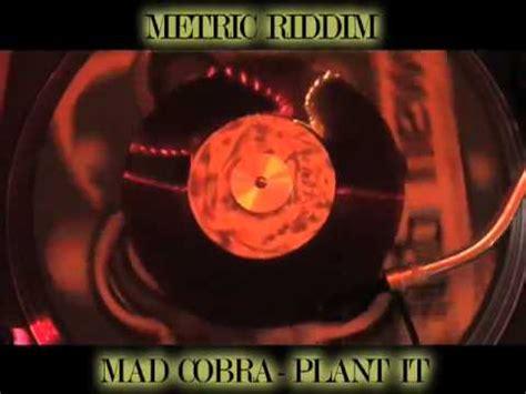 mad cobra flex mp3 download elitevevo mp3 download