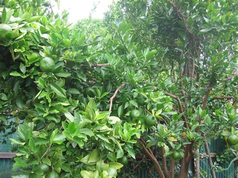 fruit tree care forum care of fruit trees