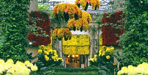 fiore autunnale giardino dei sogni un altro fiore autunnale il crisantemo