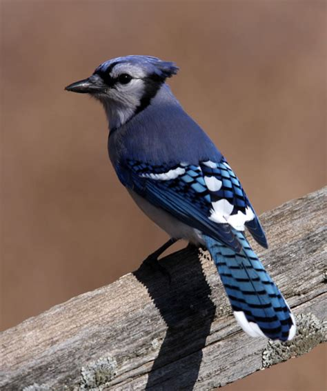 birding birding in kentucky kentucky state parks