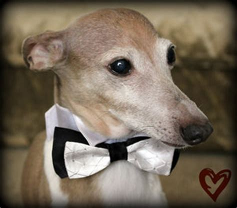 hair o the dog black tie party 1000 images about pets at weddings on pinterest pets at