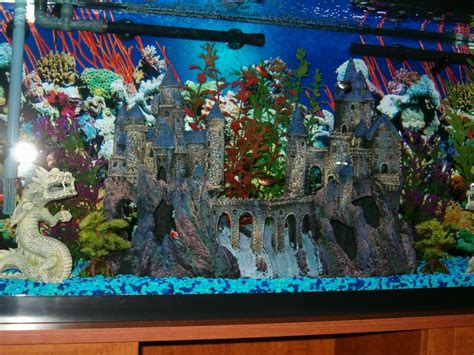 55 gallon fish tank how many fish how many fish can you put in a 55 gallon tank my dog ate my