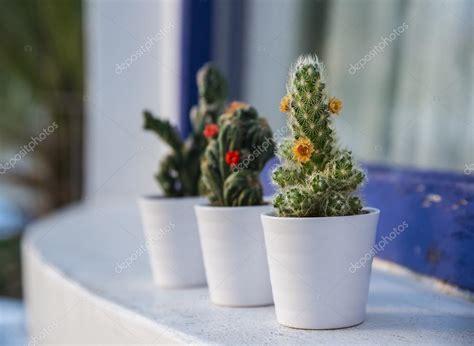 vasi per cactus vasi piante grasse design vorrei realizzare un giardino