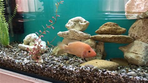 Decorations For A Fish Tank by Fish Tank Decoration At Home Idea