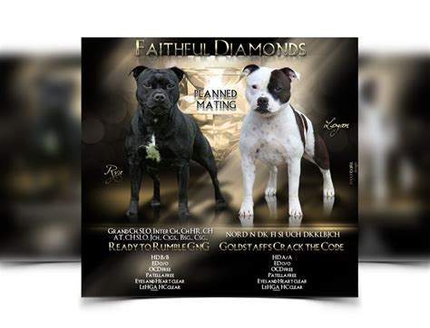 pet service advertising create flyers brochures posters more