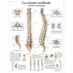 la colonne vert 233 brale anatomie et pathologie vr2152uu