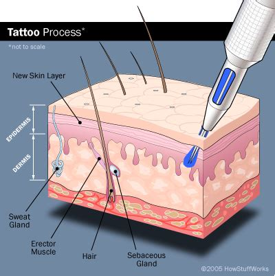 modern tattoo process cur aduk how tattoos work