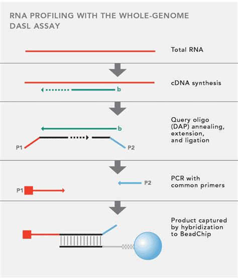 illumina whole genome sequencing whole genome dasl assay