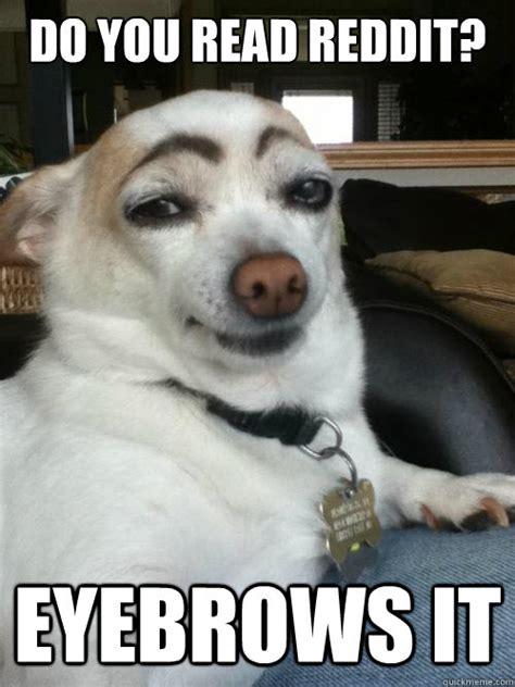 Eyebrows Internet Meme - eyebrows dog memes quickmeme