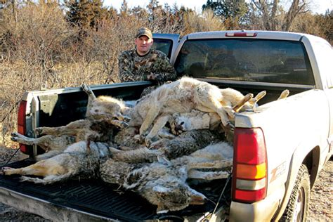Hunting Giveaway - why coyote contests are good for hunting petersen s hunting