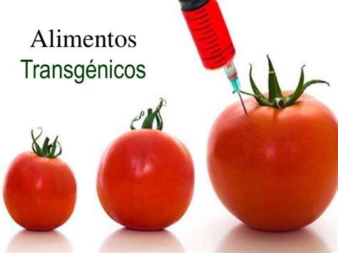 alimentos transgenicos alimentos transg 233 nicos