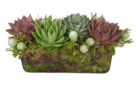 Modern Moroccan by Succulent Rectangle Arrangement Jayson Home