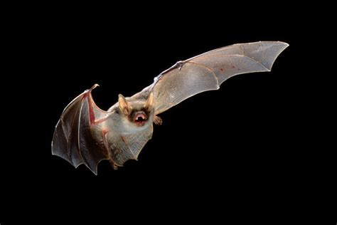 20 things you didn t know about bats