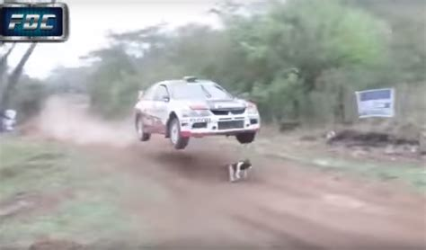porsche rally car jump rally car jumps over luckiest dog in the world