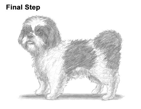 how to draw a shih tzu puppy step by step how to draw a shih tzu