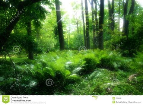 lush green forest path sunny wallpapers lush green image gallery lush green