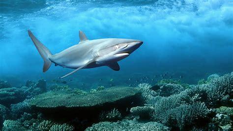 Creatures Of The gallianmachi cool sea creatures pictures