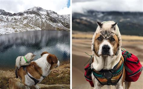 henry s puppies this and cat are best friends and they re traveling the world together travel