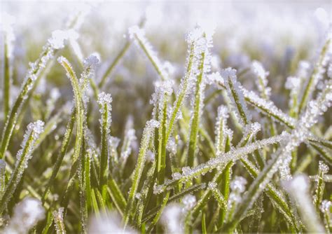 winter lawn care lawn care the ultimate guide tips on lawn care treatment